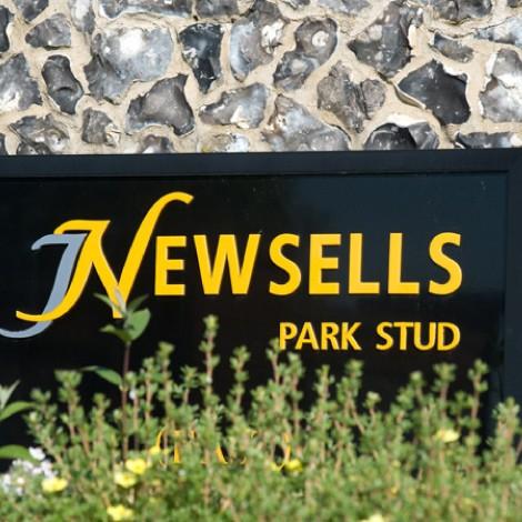 newsells_thumb