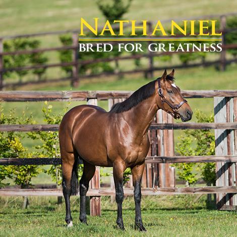 Nathaniel_Newsells main image5
